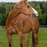 horse scholarships